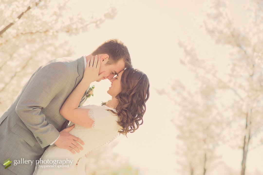 A couple dipping and kissing amongst cherry blossoms for wedding photography at the Utah State Capitol.